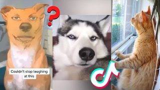 Tik Toks Funny Pets Doing Funny Things 😍
